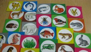 дидактические игры по экологии, игры по экологии в детском саду