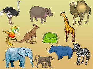 животные африки, занятие в детском саду животные африки