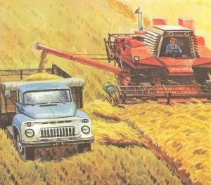 комбайн молотит зерно