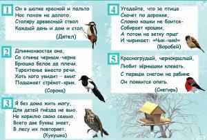загадки птицы, загадки птицы зимой