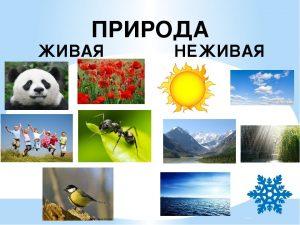 природа живая и неживая