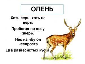 загадка олень